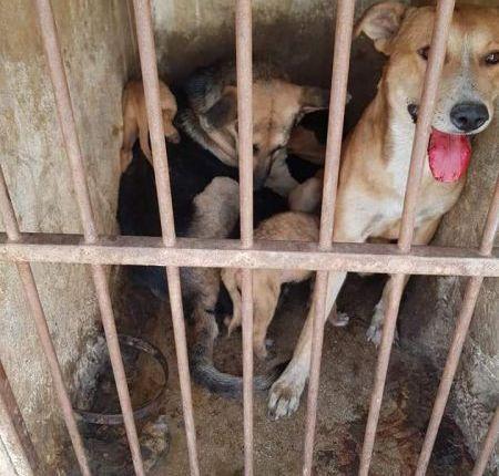 مقاطعة الحي الحسني تعلن الحرب على  الكلاب الضالة