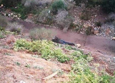 العثور على جثة مشجع رجاوي كان عائدا من بركان بعد مباراة الرجاء والنهضة