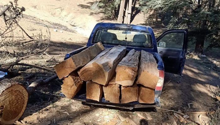 حجز سيارة مجهولة الهوية وإحباط تهريب 22 رافدة خشبية من الأرز بميدلت