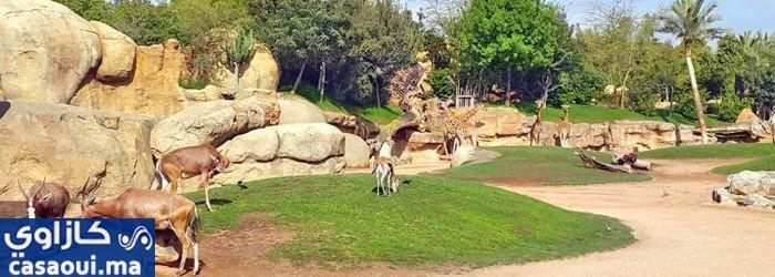الحيا: كورونا أخرت افتتاح حديقة الحيوانات بعين السبع