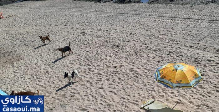الكلاب تفرض سيطرتها على شاطئ الصنوبر (دافيد)